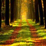 wandelen in het bos